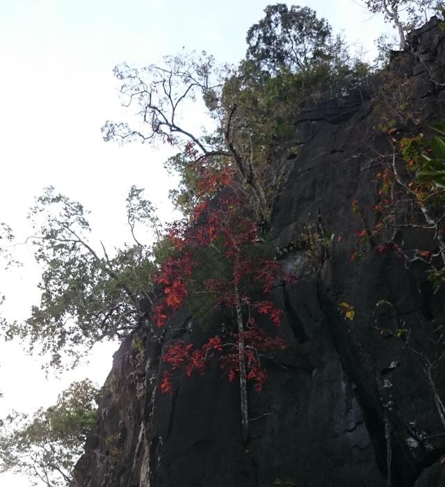 ランカウイ島の紅葉