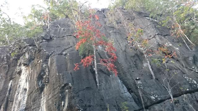 ランカウイ島の紅葉2